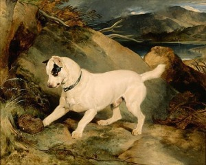 Edwin Landseer, Portrait of a Terrier, The Property of Owen Williams, ESQ., M.P. (Jocko with a Hedgehog), 1828. Gift of Erwin C. Uihlein. Photo by Larry Sanders.