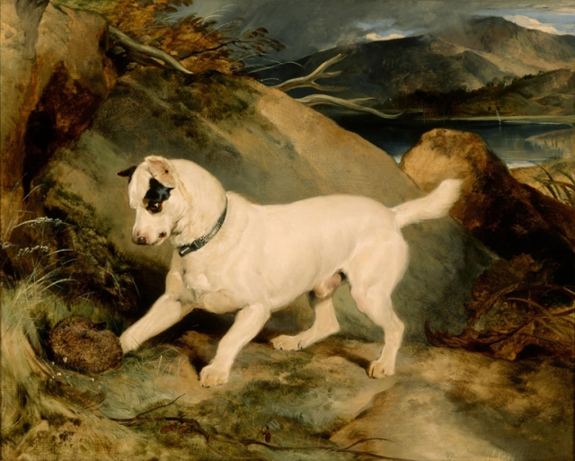 Edwin Landseer (English, 1802–1873). Portrait of a Terrier, The Property of Owen Williams, ESQ., M.P. (Jocko with a Hedgehog), 1828. Oil on canvas. Milwaukee Art Museum. Gift of Erwin C. Uihlein. Photo credit Larry Sanders