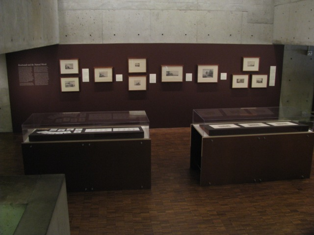 "Installation views of the ""Rembrandt and the Natural World"" Mezzanine rotation. Photo by the author"