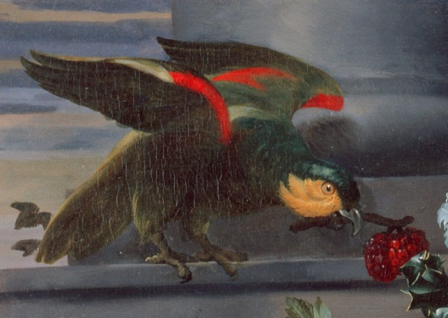 Detail of Maria-Theresia van Thielen (Flemish, 1640–1706), Still Life with Parrot, 1661. Oil on canvas. 21 × 27 in. (53.34 × 68.58 cm). Milwaukee Art Museum, gift of Mr. and Mrs. John Schroeder in memory of their parents. M1967.41