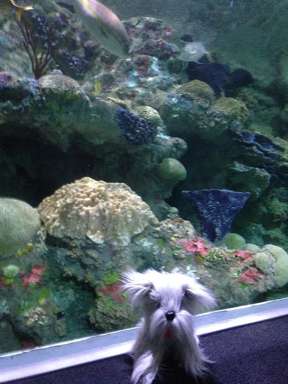 Sunny at Discovery World-Reiman Aquarium